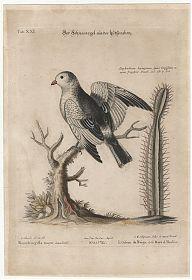 Buch- und Kunst-Antiquariat Joseph Steutzger / www.steutzger.info